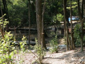 社家郷山キャンプ場 キャンプサイト