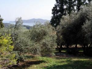 牛窓オリーブ園