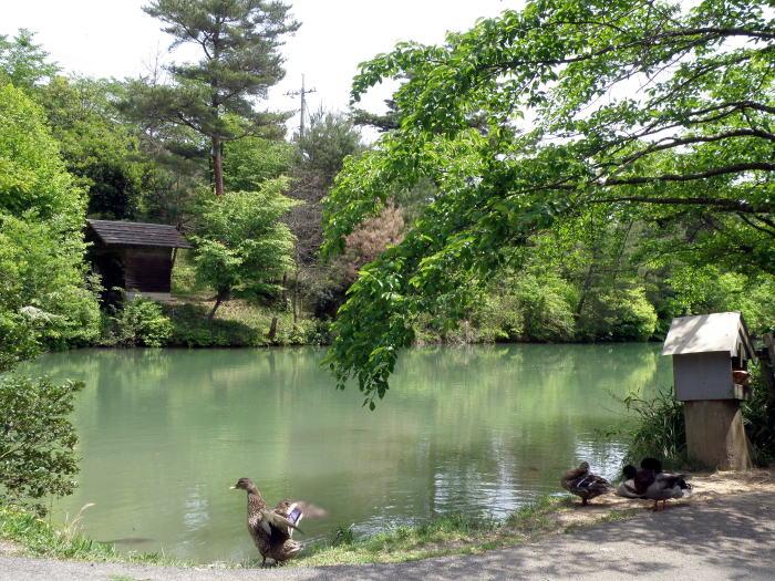 能登香の里小房 たわだ池