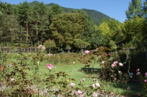 北播磨余暇村公園 バラ園