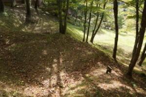 勝山美しい森 テントサイト