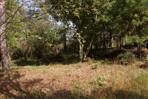 高間キャンプ場 テントサイト (4)