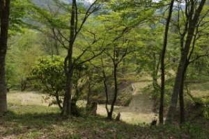 ひろしま県民の森第2キャンプ場