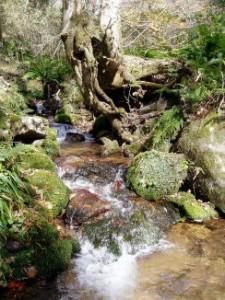 若杉天然林 吉野川水源