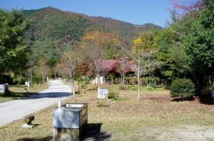 大佐山キャンプ場区画サイト