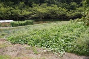 やしろ鴨川の郷 体験農場