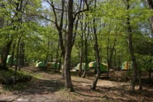 ひろしま県民の森第1キャンプ場常設サイト