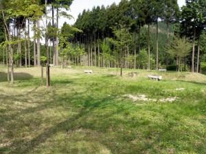 津谷キャンプ場 キャンプサイト