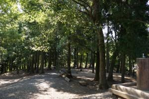 竜天天文台公園キャンプ場 テントサイト