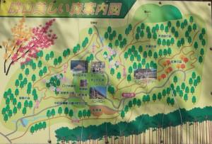勝山美しい森 現地案内図