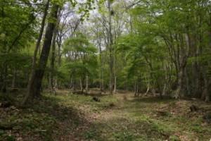 ひろしま県民の森せせらぎキャンプ場