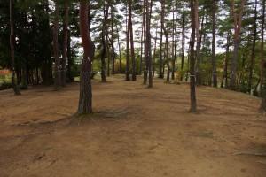 亀島キャンプ場 松林