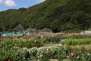 黒川ダリヤ園 (2)