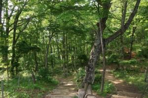 もみのき森林公園わんぱくの森