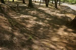 矢野温泉公園 四季の里フリーサイト