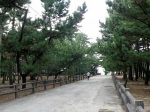 慶野松原 プロポーズ街道