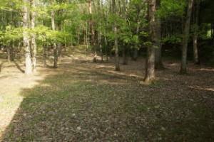 帝釈峡スコラ高原キャンプ場 林間サイト
