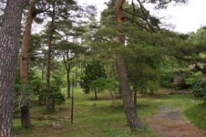 琵琶ヶ池「いこいの森」キャンプ場 キャンプサイト