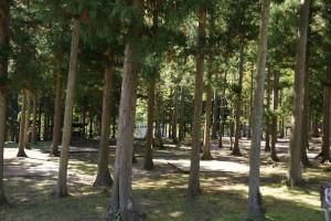 くるみの里キャンプ場 テントサイト (3)