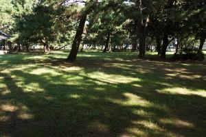 観音寺一の宮海岸 テントサイト