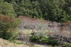 木谷山キャンプ場 遠景