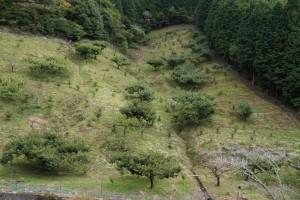 ユニトピアささやま 栗林