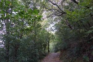 早島ふれあいの森公園 散策路
