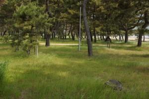 松原キャンプ場 テントサイト (2)