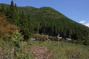 原観光りんご園 (2)